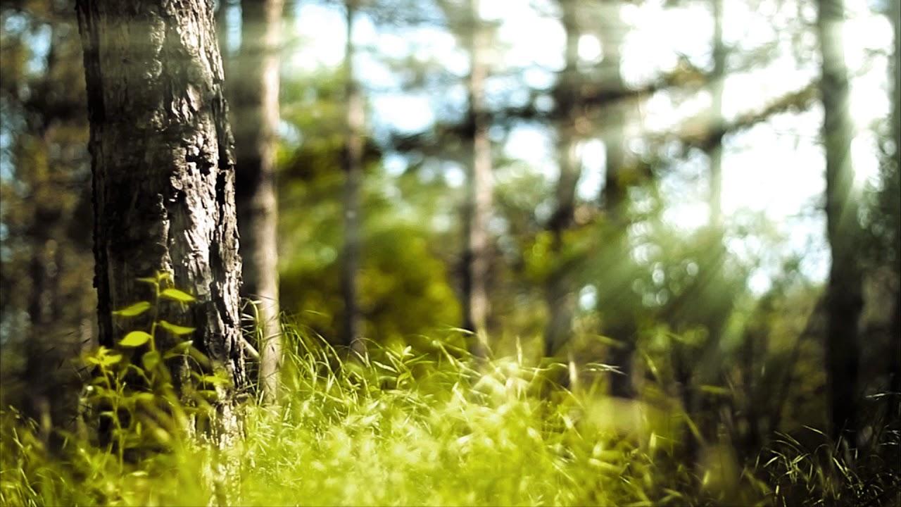 Мерцающие, анимация картинки леса
