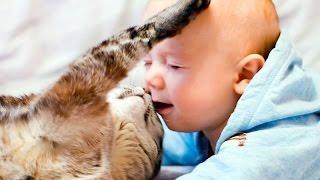 Ласковые породы кошек. Самые ласковые кошки. Affectionate cat breeds.