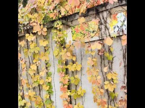 Beijing Autumn Fall 2k17-Beijing Life- Autumn Fall Beijing-Beijing Dairies