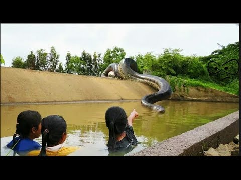 amazing snake trap || first creating snake || OMG