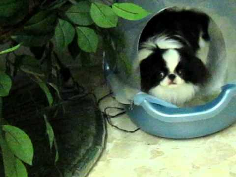 Perfect Indoor Potty Solution For Small Dogs Odorfree YouTube - Indoor dog bathroom solutions