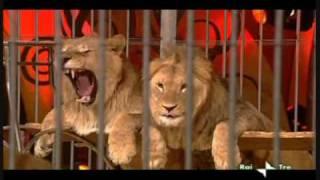leoni di manuel farina