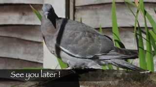 The Balance Procedure For Animals/birds