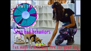 STOP BAD BEHAVIORS *Positive Dog Training