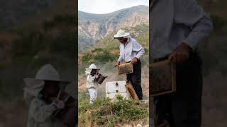 Μάνη Θυμαρίσιο μέλι