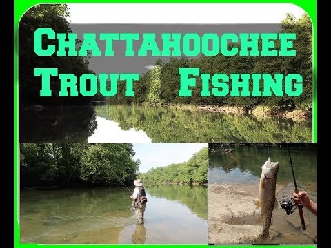 ★Fishing TROUT Atlanta's Chattahoochee River | 24 FISH |  Georgia★