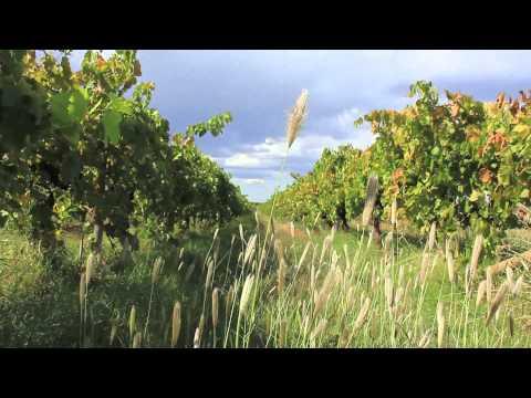 Robinvale Organic & Bio-Dynamic Wines Australia