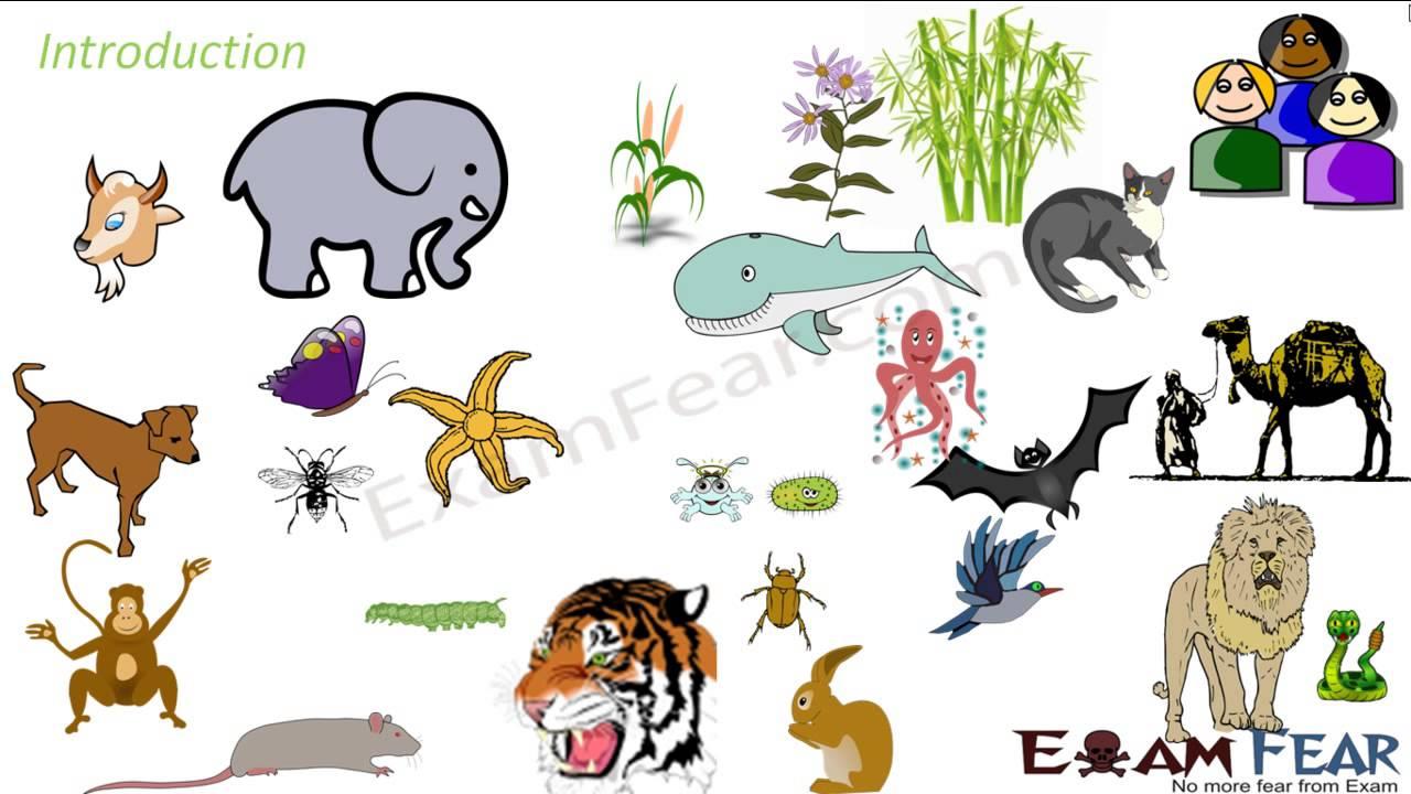 Biology Reproduction part 1 (Introduction) CBSE class 10 X ...