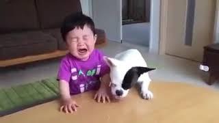 Whatsapp Funny Videos 2016   Funny Moment 2017