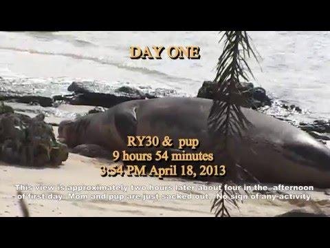 Days1-6 Life History Hawaiian Monk Seal 2015.5.15b