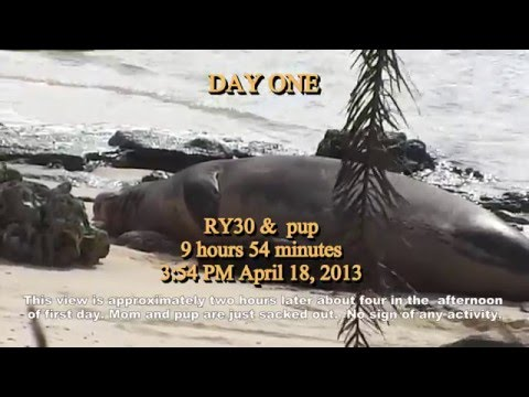 Days1-6 Life History Hawaiian Monk Seal 2015.5.15b