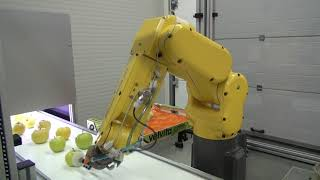 Robotic machine for sorting and packing fruit