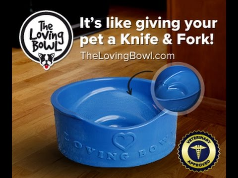 Best food bowl for persian cats