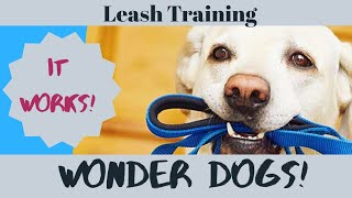 Dog Leash Training GUARANTEED to work! Stop leash pulling with trainer Secrets.
