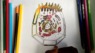 How to draw animal cell step by step