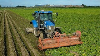 New Holland T6020 loofvernietigen met de Loof-Does