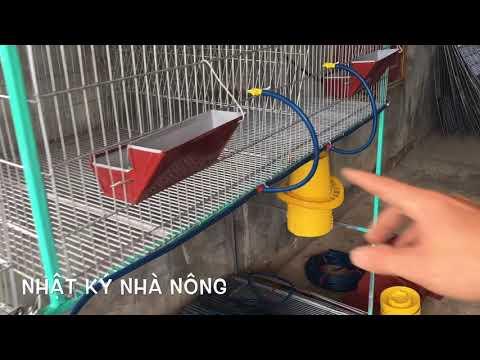 Nuôi thỏ và gửi   lồng thỏ công nghiệp cho khách   NKNN