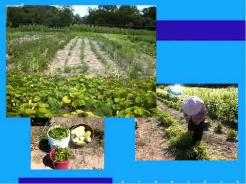 MILWAUKEE CO UWEX COMMUNITY GARDEN PROGRAM REVIEW