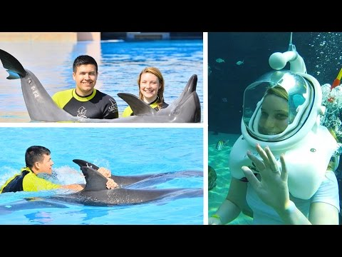 SWIMMING WITH DOLPHINS AND WALKING WITH SHARKS...!!!