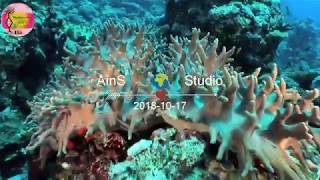 House music 2019 -  sea underwater 4k