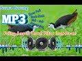 Suara Burung Ruak- ruak (mp3) original || cocok untuk memikat