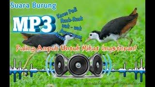 Suara Burung Ruak- ruak (mp3) || cocok untuk memikat