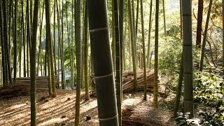 Pot Planting Bamboo And Soil Mixing