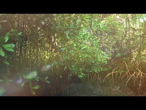 Nanan Caroni Bird Sanctuary Tours Ltd