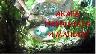 Акара, Наннакара содержание и уход. История ЛЮБВИ.