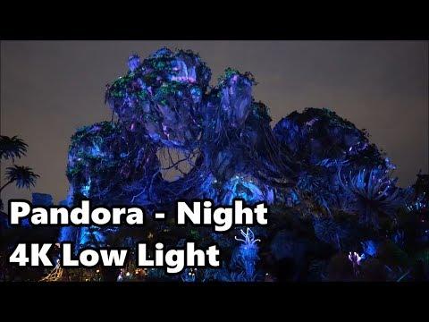 Pandora Nighttime Tour - 4K Ultra Low Light | Disney's Animal Kingdom