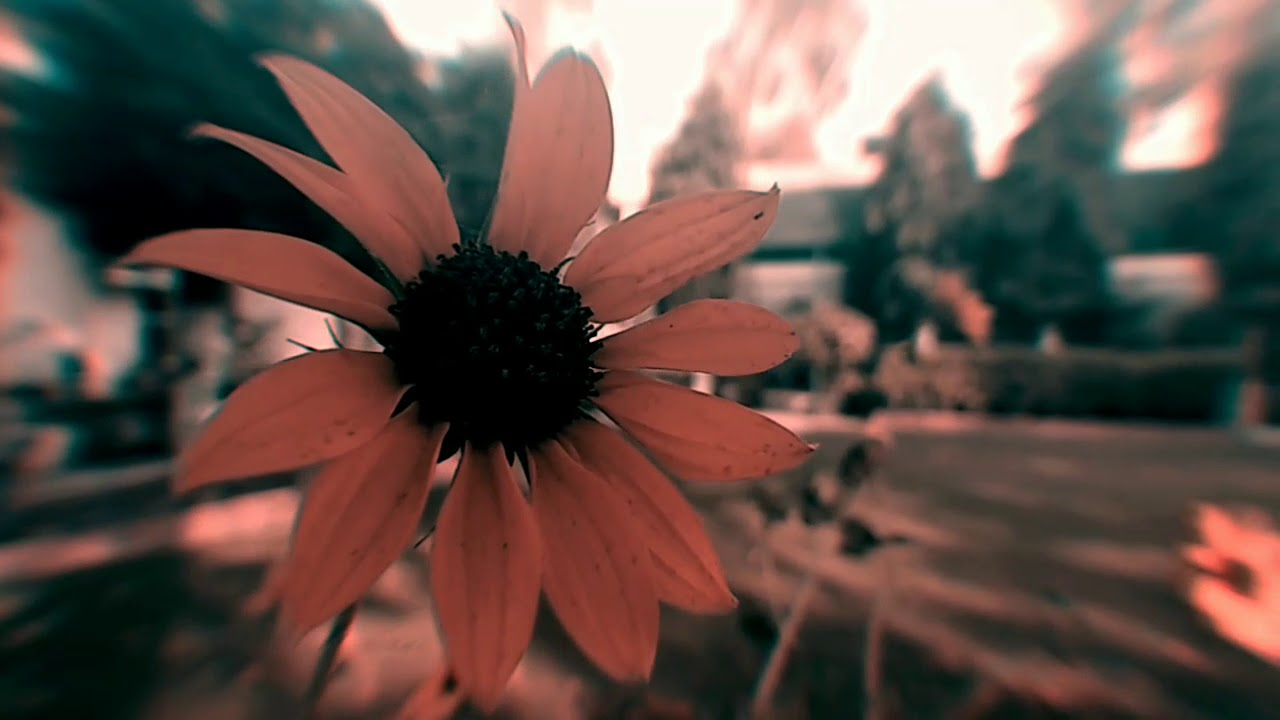 Royalty Free Flower Aesthetic Video Youtube