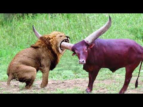 Эти Битвы Животных