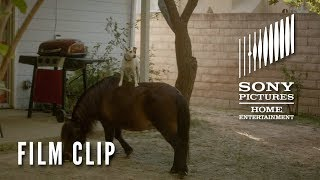 ADVENTURES OF DALLY AND SPANKY Clip -