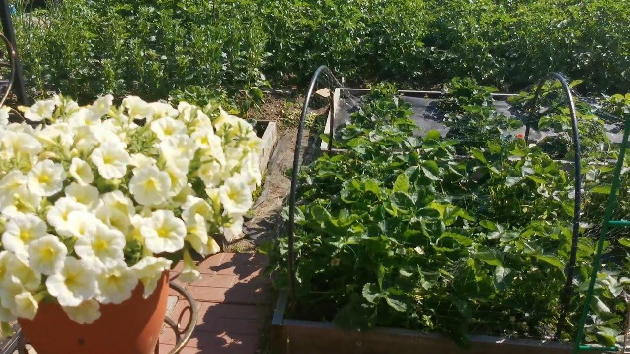 Обработка овощных и ягодных культур от вредителей и болезней летом.