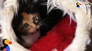 Kitten Trapped For TWO DAYS Saved by Determined Rescuers | The Dodo