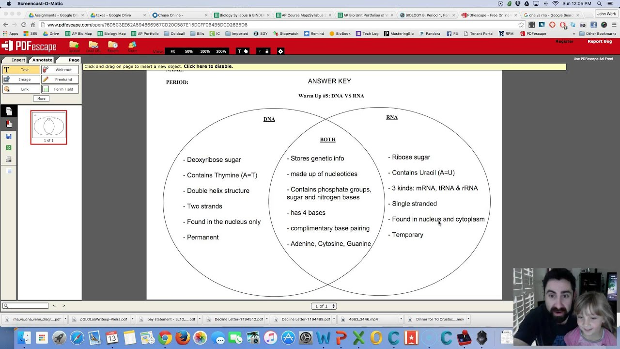 worksheet Dna Vs Rna Worksheet answers dna vs rna venn diagram youtube diagram