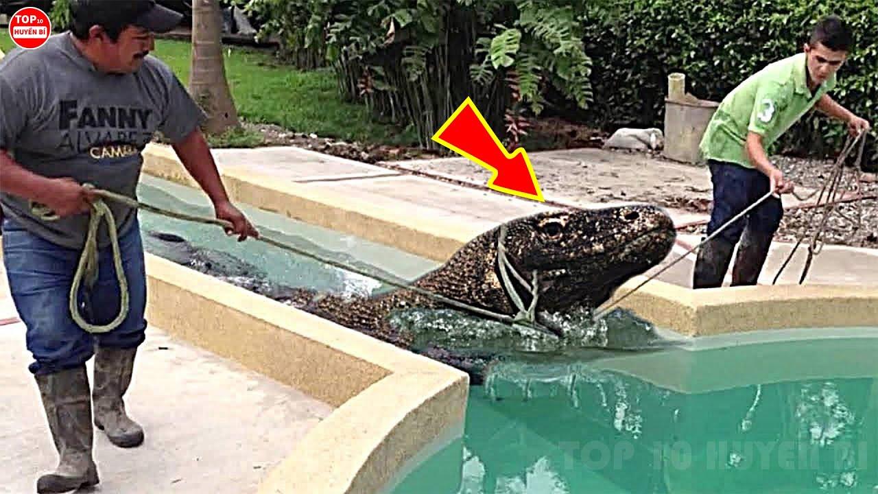 10 Con Vật Nguy Hiểm Và Đáng Sợ Được Phát Hiện Trong Bể Bơi Khiến Chủ Nhà Chỉ Biết Khóc Thét