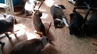 Catnip (Everybody gets stoned)