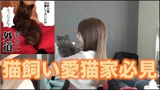 【youtubeって】うちの猫に貢物が届きました【すげぇ】