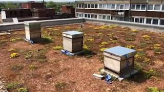 The busy theatre bees of Hammersmith