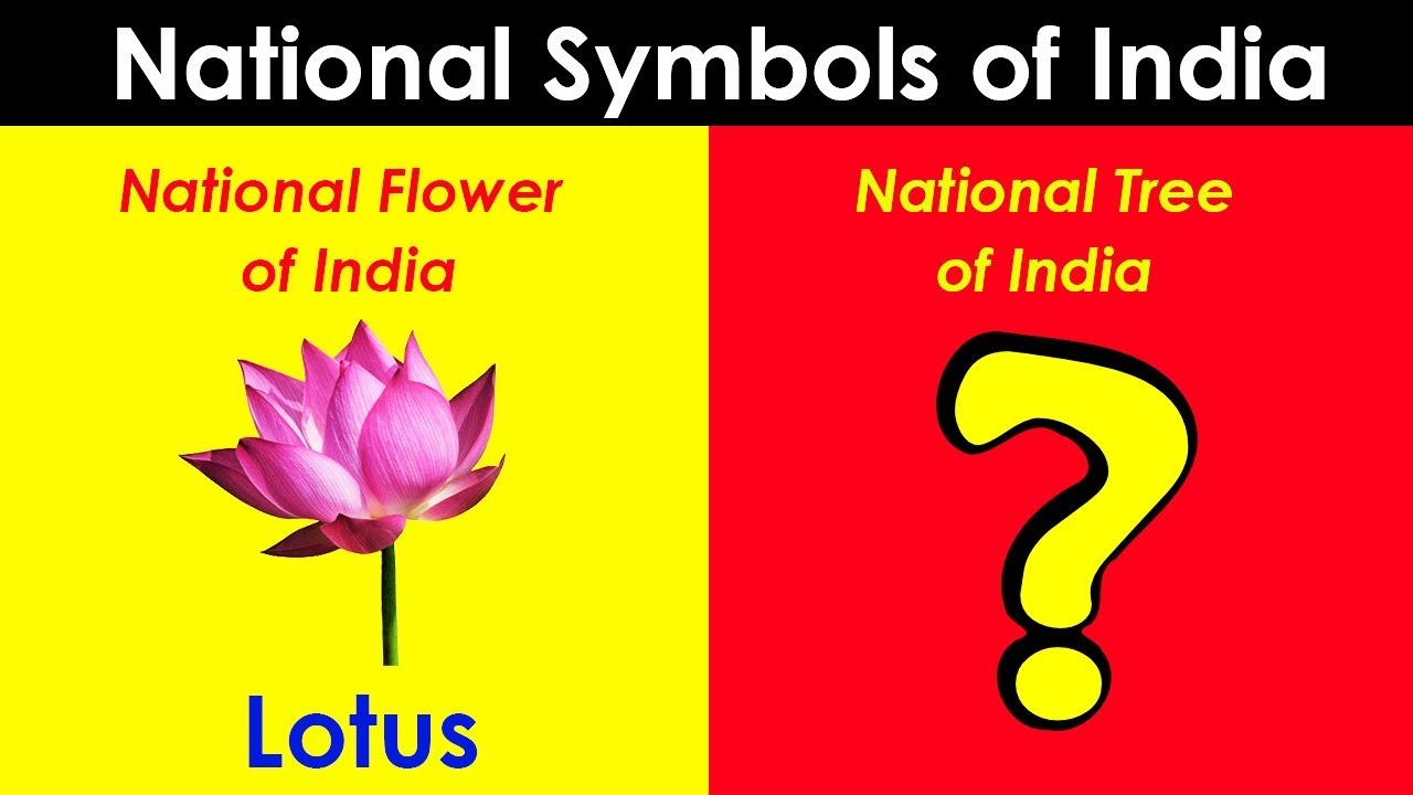 Top 10 national symbols of india youtube top 10 national symbols of india izmirmasajfo