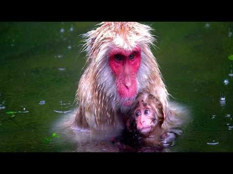 Los monos animales sorprendentemente inteligentes