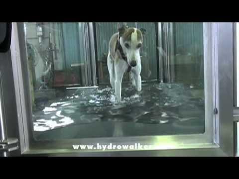 Dog underwater treadmill low cost rehab: Hydrowalker.