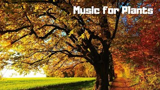 Soothing Music for Plant Growth, Happiness and Their Overall Health
