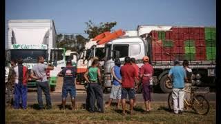 Baixar A Billion Brazilian Chickens, 20 Million Pigs Could Perish In Coming Days