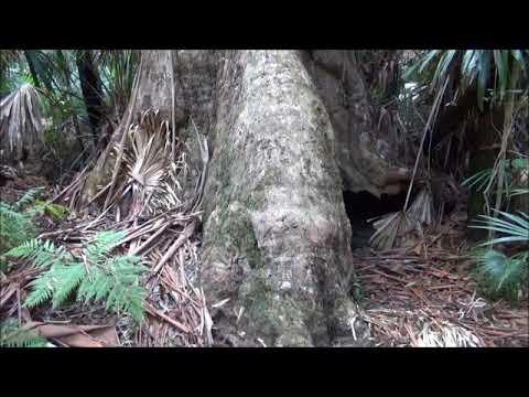 Australian Wilderness Adventures: Episode 014 - Wallingat National Park