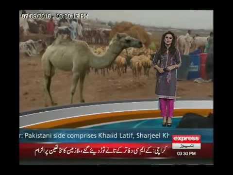 Chotay shaher ki bari qurbani express news sheikhupura sa shahid khan ki report