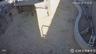 ChickenJS Live Stream thumbnail