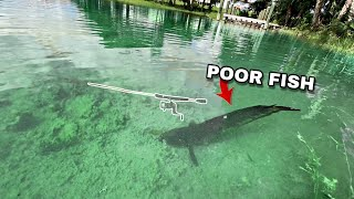 Saving Fish from Neglected Fishing Rod (FISH EMERGENCY)