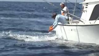 marlin iztapa guatemala 2 14 09